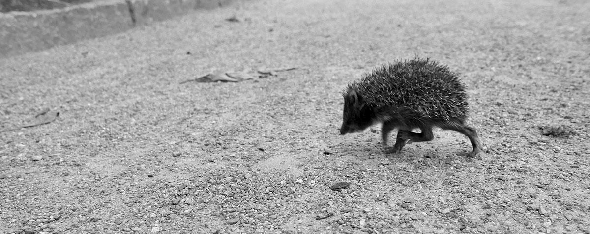 Nejhlučnějším obyvatelem Ztracenky bývá dupající ježek.