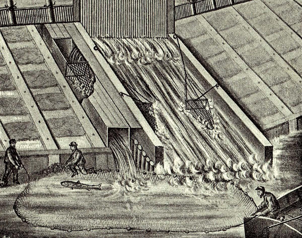 Pražská lososnice