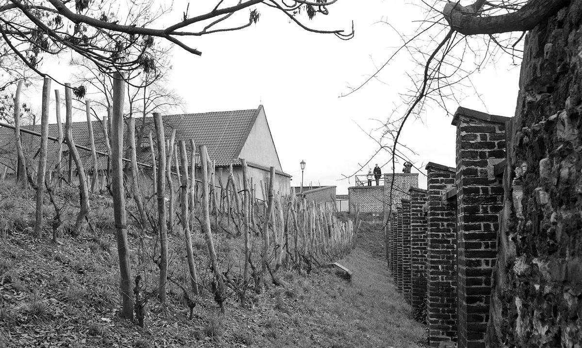 Vyšehradská vinice na střeše Gotického sklepa