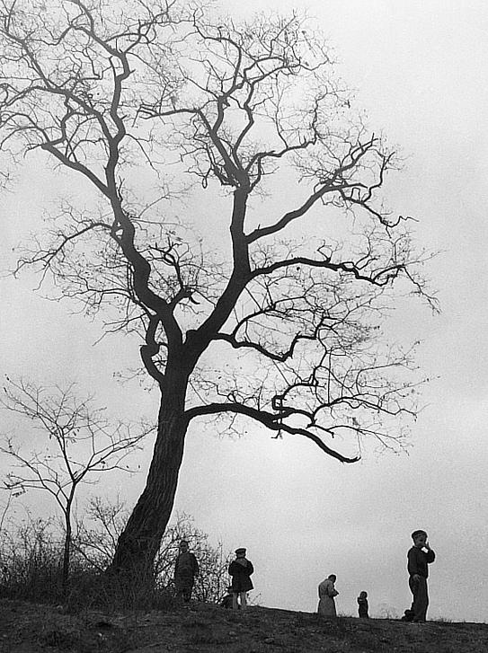 František Čihák - Holý strom na vršku Folimanky